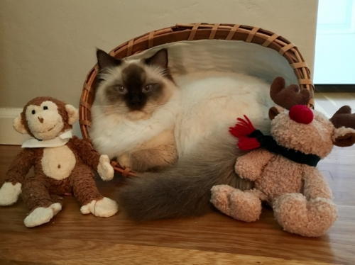 Mittens with toys.